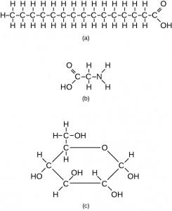 Gambar 2.13 Contoh-contoh ini menunjukkan tiga molekul (ditemukan dalam organisme hidup) yang mengandung atom karbon yang terikat dalam berbagai cara dengan atom karbon lain dan atom dari unsur-unsur lainnya. (a) Molekul asam stearat ini memiliki rantai panjang atom karbon. (B) Glycine, komponen protein, mengandung atom karbon, nitrogen, oksigen, dan hidrogen. (c) Glukosa, gula, memiliki cincin atom karbon dan satu atom oksigen.